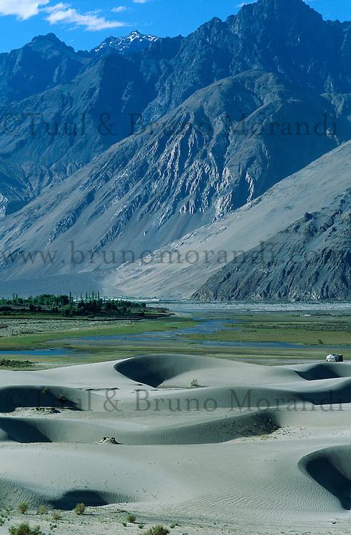 Inde - Province du Jammu Cachemire -  Ladakh - Vallée de la Nubra - Dunes de sable a 4000 m d'altitude. // India. Jammu Kashmir province. Ladakh. Nubra valley. Sand dunes at 4000 m altitude.