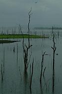 Es la casa de una variedad asombrosa de fauna, incluyendo especies de p&aacute;jaros raras veces vistas, el Lago Bayano es uno de los tesoros m&aacute;s fant&aacute;sticos de Panam&aacute; pero esta es tambi&eacute;n una de las &aacute;reas menos conocidas de Panam&aacute;: provincia al este de Panam&aacute;. A pesar de estar a s&oacute;lo una hora y media de camino de la Ciudad de Panam&aacute;, para la gran mayor&iacute;a de paname&ntilde;os es tan desconocida la belleza del lago Bayano como para los miles de turistas que llegan cada semana.<br /> <br /> La gran mayor&iacute;a de la tierra que rodea Bayano fue reservada para los establecimientos de ind&iacute;genas locales y que tuvo que ser inundada para crear el lago.<br /> <br />  El Lago Bayano proporciona, en este momento, la fuente principal de ingresos para sus residentes locales que cosechan miles de toneladas de pescado de tilapia para la venta en la zona y para mercados extranjeros. Aunque es un lago &ldquo;artificial&rdquo;, el Lago Bayano se ha hecho el h&aacute;bitat natural de unos cientos de p&aacute;jaros y especies de animales, incluyendo unos que son encontrados en muy pocas lugares del mundo.<br /> <br /> &copy;Alejandro Balaguer/Fundaci&oacute;n Albatros Media.