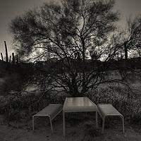 A forgotten table hidden behind a tree, San Tan Regional Park