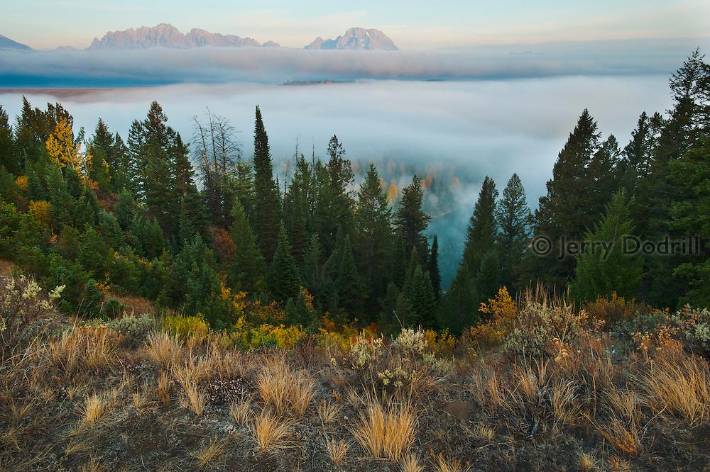 Transitional ecosystems along the Snake River, Grand Tetons National Park, Jackson, Wyoming