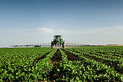 24 June 2011- Greg Nuttleman's Farm in Stomsburg, Nebraska is photographed for FMC Authority.