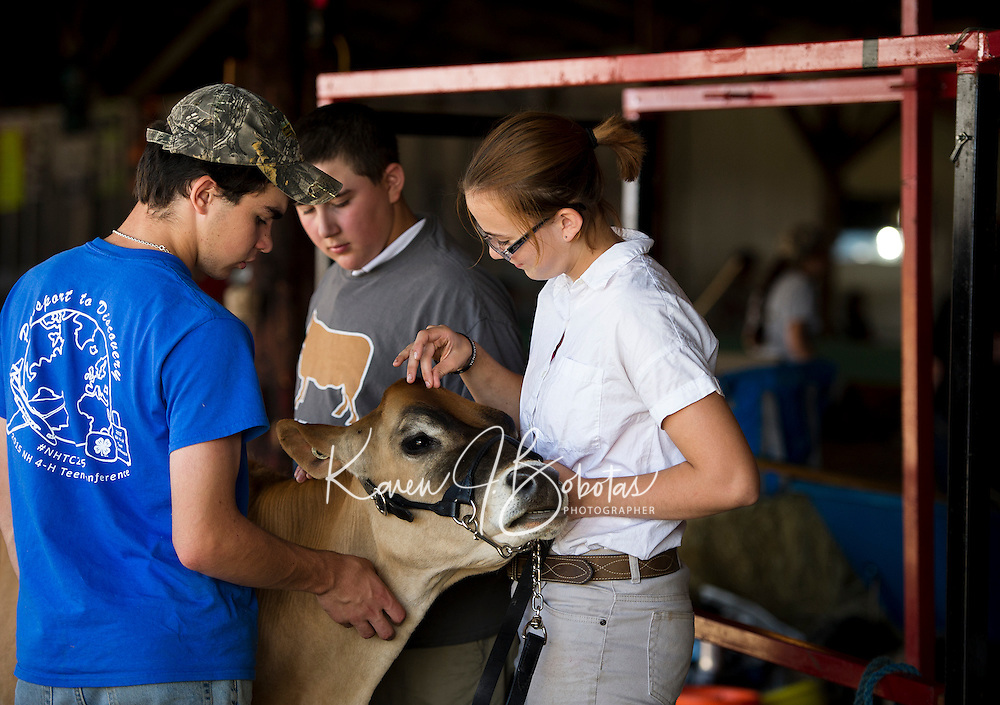 "Joe Garcia, Patrick Marcoux and Makenzie Pepper work together to prep ""Flame"" a summer yearling for the Fit and Show, Herd and Breed competitions at the Belknap County 4H Fair Saturday morning.   (Karen Bobotas/for the Laconia Daily Sun)"