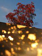 Reflets de soleil sur un panneau avec arbre au fond, automne 2009. Sonnenlicht-flecken auf Wand mit Herbstbaum im Hintergrund. © Romano P. Riedo