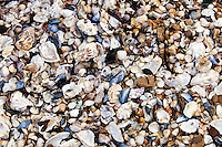 Close-up of seashells on seashore