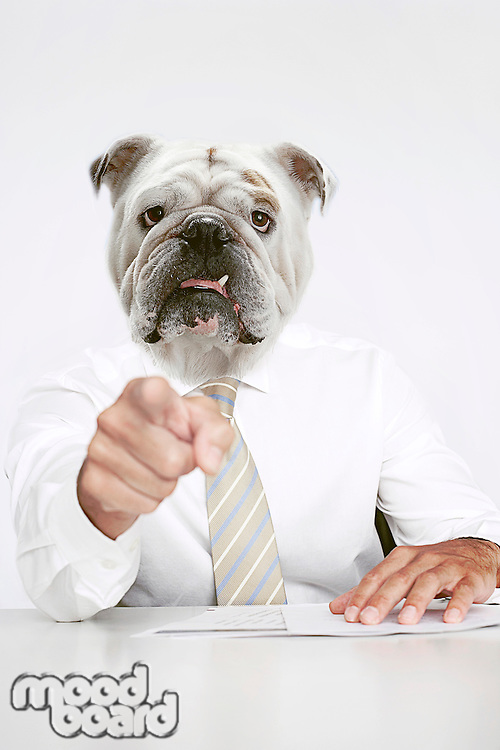 British Bulldog Businessman pointing at the camera