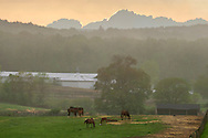 Mount Hope, New York - Horses and fog at Hidden Lake Farm on May 11, 2013.