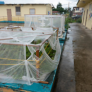 JULY 20, 2018---YABUCOA, PUERTO RICO----<br /> Organic garden in the Community School Jaime C. Rodriguez in Yabucoa, which is still under reconstruction months after the path of Hurricane Maria through the town.<br /> (Photo by Angel Valentin/Freelance)