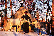 Tsaatan & reindeer<br /> Nomadic tribe with +-200 individuals left who still live in teepees<br /> Taiga Forest<br /> Northern Mongolia