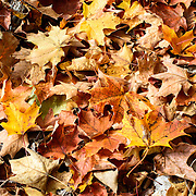 Orange and brown leaves on the ground in upstate New York during the Fall.