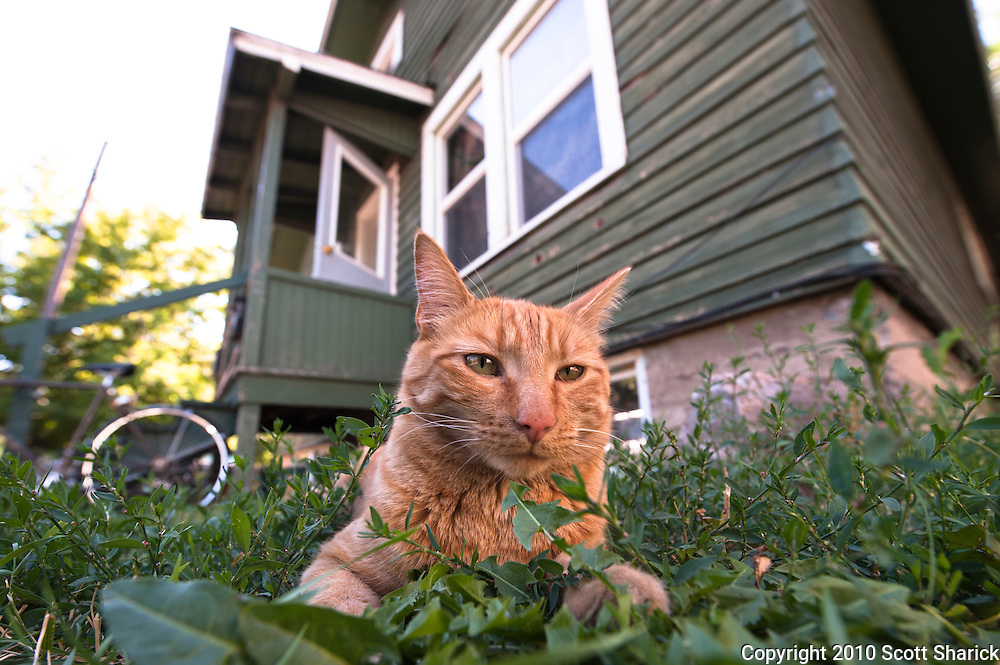 A cat sits on the grass relaxing in front of a house. Missoula Photographer