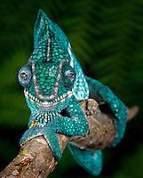 Madagascar - Ambabja