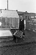 06/04/1963<br /> 04/06/1963<br /> 06 April 1963<br /> Ken Hill gardening at his home, 159 Kincora Road, Clontarf, Dublin. Special for Irish Shell Ltd.