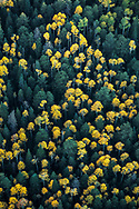 San Francisco Peaks, Arizona, aspen trees in autumn, aerial photography