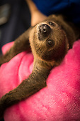 Sloth and friends