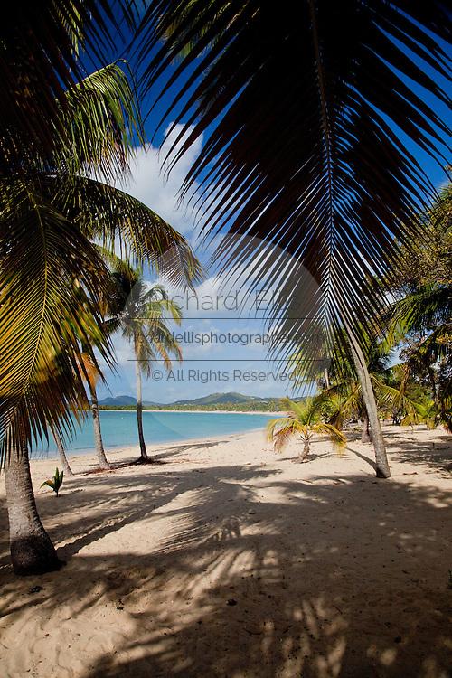 Sun Bay beach on the Caribbean Island of Vieques, Puerto Rico