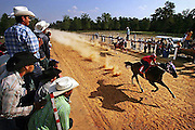 "glamh ""Carreras""---The Torres family, a prominent Hispanic family in Saluda, recently started the Mexican tradition of horse racing on land they bought outside of town. The races usually quarter mile sprints on a straight track draw hundreds each racing day. Horse racing is becoming popular throughout South Carolina and bordering states with more tracks opening up each year. Hispanics say it is a harmless tradition where friends get together and have innocent wagers for bragging rights. Opponents complain of the noise, illegal gambling and alcohol abuse.."