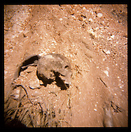 A human skull sits on the top of a mass grave site where victims of cholera and the earthquake are buried on Thursday, November 25, 2010 in Titanyen, Haiti.