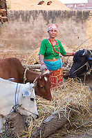Woman in traditional colourful clothes tending to her cows in a Terai village, Nepal
