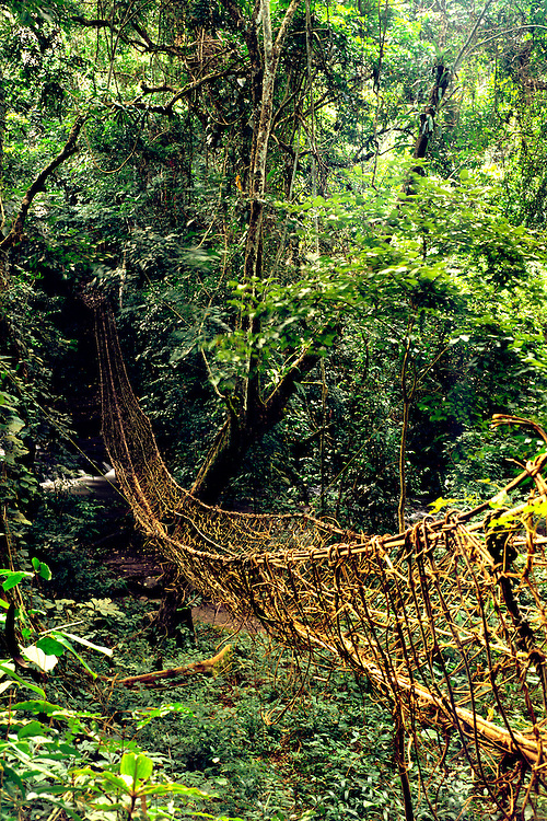 Liana bridge crosses stream gorge in rainforest mountains west of town of Man in Dix Huit Montagnes region, Ivory Coast, Africa