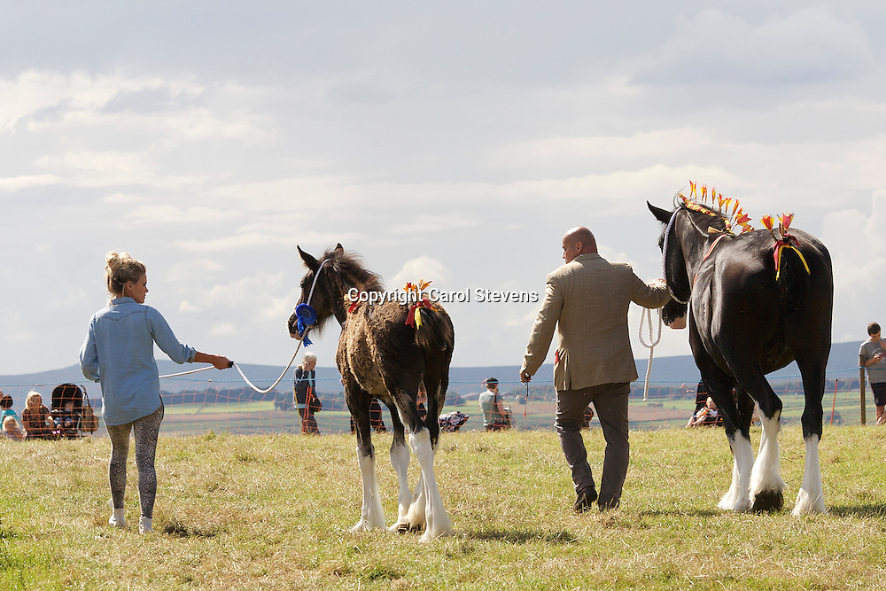 Emley Show 2012  <br /> Crossingtons Inkatink  f April 2012  Sire - Penrhos Braveheart  Dam - Westfield Lucky Charm (Best Brood Mare)