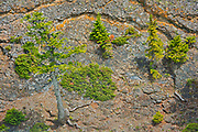 Shrubs and trees growing on the steep cliffs along the Bow River at Bow Falls<br />