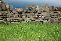Stone wall by field
