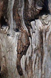 Tree Bark Detail, Stuart Island, Washington, US