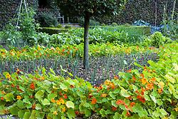 Nasturtiums lining path around leek bed in the vegetable garden at Ballymaloe Cookery school