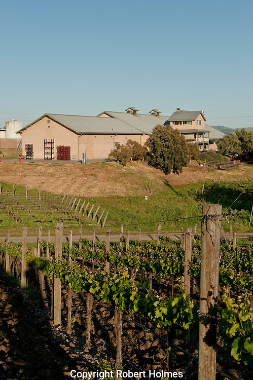 Acacia winery, Carneros, NApa County, California