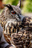 St Johns manor Falcons