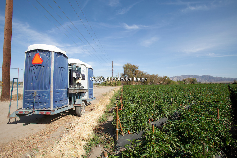 Growing Red bell peppers in Southern California's Imperial Valley