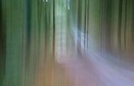 Abstract of Felbrigg Woods, Norfolk, UK
