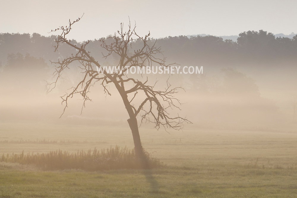 Goshen, New York - Birds gather on the branches of a tree as early morning fog covers part of a farm field on July 22, 2014.