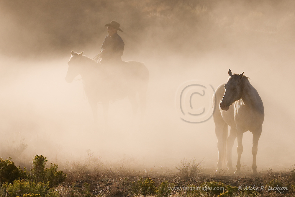 Wranglers roping trail horses and mustangs in a dusty canyon. Evening and morning images.