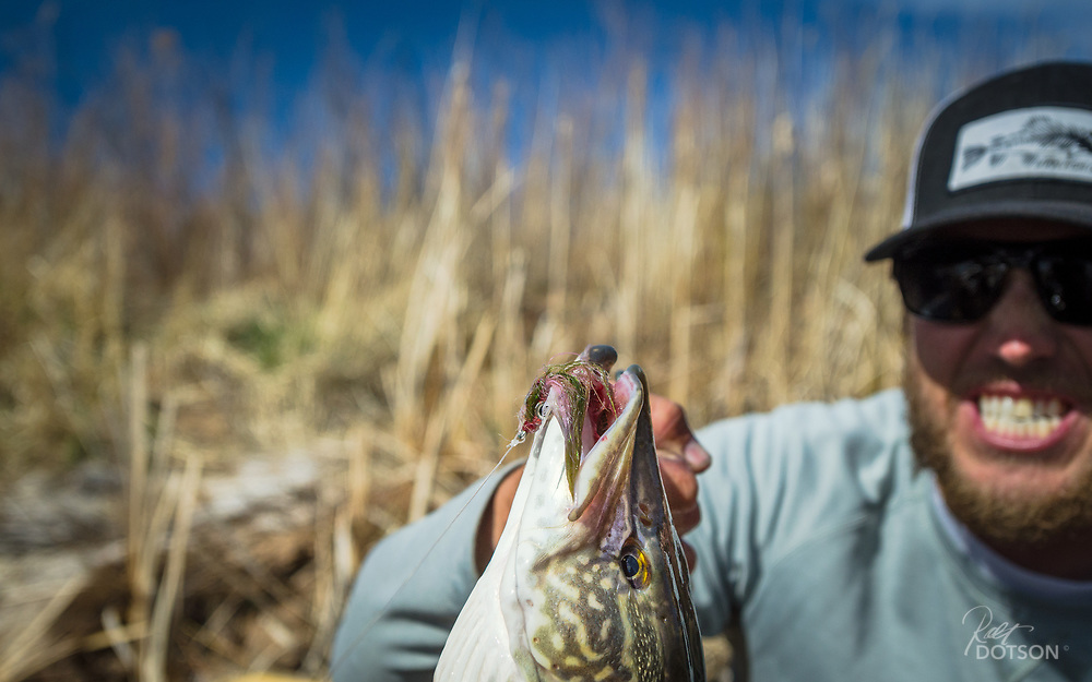 Northern PIke takes a big lead eyed streamer and is anchored tight as Jordan of Utah Fish Chasers holds on to this lower Green River predator.