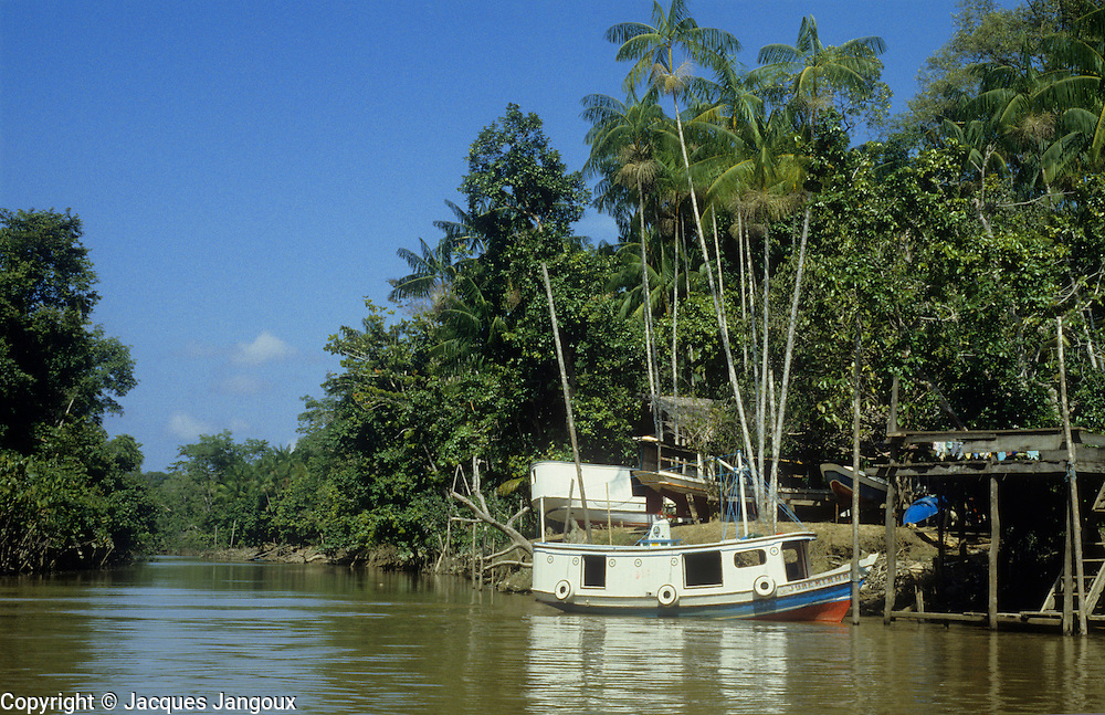 Brazil, Amazon region, Para State. Rio Guama, with boat and three boats on land. Palm is assai (açai), Euterpe oleracea.