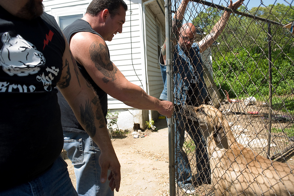 """Rescue Ink, Long Island, New York, taettowierte Motoradgang, Verein zur Rettung mishandelter Hunde und anderer Tierarten.vlnr:.""""Batzo"""", """"Big Ant"""",Joe Panz, .Rescue Ink, the animal rescue group that brings an in your face approach to the fight against animal abuse and neglect. The goups members are heavily tattooed and ride motorbikes. Their pitbull 'Rebel', who lives at their headquarters, was rescued from a dog fighting operation, where he was used as bait. He was near death when two members of Rescue Ink flew to Virginia to save him..Foto © Stefan Falke."""