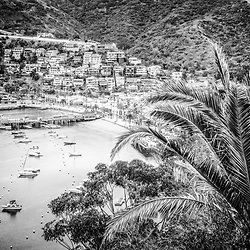 Catalina Island Avalon Bay black and white picture. Catalina Island is a popular destination off the coast of Southern California in the United States.