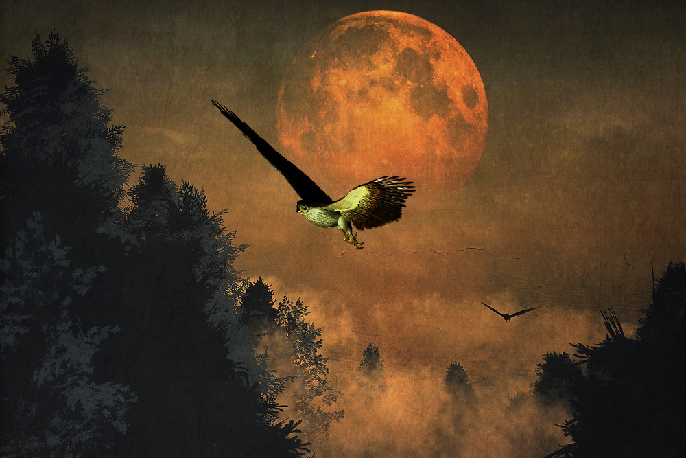 This dynamic, rich piece features the striking visual of falcons in their distinctive, powerful surroundings. A moon that is simply massive, almost too close for comfort, hangs over the evening sky. The falcons are profoundly dedicated to their purpose. They will not stop hunting until they have found what they are looking for. If you happen to be one of the animals preferred by falcons, it isn't hard to imagine the moon representing the heart. It is almost about to burst from fear and excitement. Available in several print forms, or as a home interior décor product.