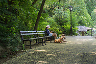 On a quiet afternoon in the Ramble of Central Park along a path strewn with blossoms of the Japanese Pagoda Tree