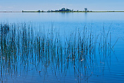 Reeds on Lake of the Woods <br />North of Rainny River<br />Ontario<br />Canada