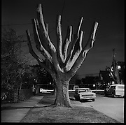 A tree after pruning or pollarding on a dark Victoria night.