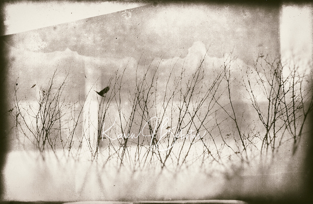 Some days all I had to do was watch the birds fly by the window.   One Word - Spooky.   ©2106 Karen Bobotas Photographer