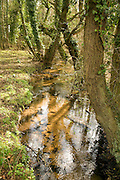 Small lowland stream running through deciduous woodland, Sutton, Suffolk, England