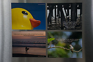 4 Photo Magnets of California, landscape, sunset, nature, surfing, hummingbird, inspirational quotes to inspire. Santa Monica, SoCal, pink sky.