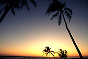 Sunset with palms<br />