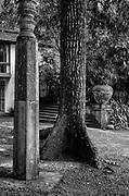 LUNUGANGA. <br />Tree & Pillar.