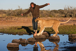 Valentin Gruener with a lioness (Panthera leo) that he raised from a small dying cub to a healthy adult; they developed a close and intense relationship, Grasslands private reserve,Botswana, Kalahari,