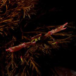 Dive Spot: Nudi Rock