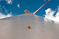 Pale Eoliche nella campagna nei dintorni di Minervino Murge. Una piccola lumaca attaccata all'enorme torre che sorregge le pale eoliche